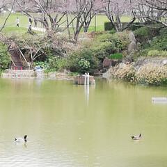 おとめが池/福岡/フォロー大歓迎/風景 今日は大学の卒業式で福岡です。