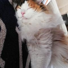 鹿児島神宮/粘土人形/猫/ハンドメイド 宮はホットカーペットですやすや寝てます😴…