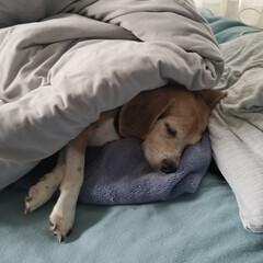 おやすみショット いつ見ても、気持ち良さそうな寝顔です💤