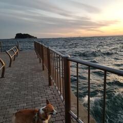 コーギー 引っ越しをしました✨ 海風が心地よい🐶 …