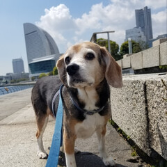 犬の散歩 海風が心地よい春💠