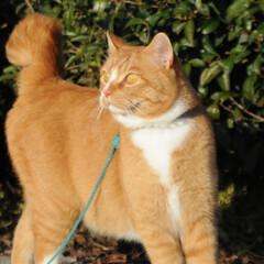 フォロー大歓迎/にゃんこ同好会/猫との暮らし/ねこのきもち/散歩/快晴 快晴☀️😻 少し寒いから走るニャー😸🐾🐾🐾(5枚目)