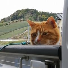 フォロー大歓迎/にゃんこ同好会/ねこのきもち/ねこ/散歩/猫 箱からにゃんこの手生えた🐾😸🐾⁉️ 今日…(5枚目)