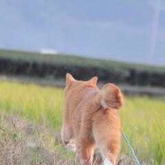 にゃんこ同好会/ねこのきもち/散歩/おでかけ/フォロー大歓迎 散歩楽しかったニャー😻 もう一回行こうニ…(2枚目)