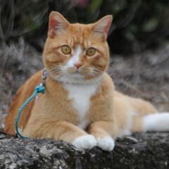フォロー大歓迎/猫との暮らし/にゃんこ同好会/ねこにすと/ねこのきもち/花/... 桜が終わって草花が伸びてきたニャー😸🌱 …(6枚目)