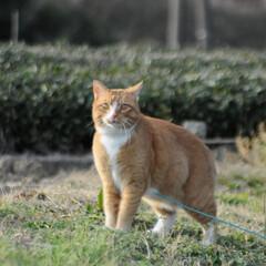 フォロー大歓迎/にゃんこ同好会/猫との暮らし/ねこのきもち/ねこにすと/風/... 今日は風が冷たかったニャー😽➿➿➿😱(2枚目)