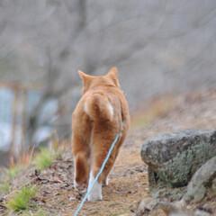 にゃんこ同好会/ねこのきもち/散歩/おでかけ/フォロー大歓迎 散歩に行くまでここから動かないニャー😸🐈…(2枚目)