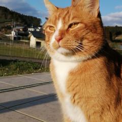 フォロー大歓迎/にゃんこ同好会/猫との暮らし/ねこのきもち/散歩/快晴 快晴☀️😻 少し寒いから走るニャー😸🐾🐾🐾(1枚目)