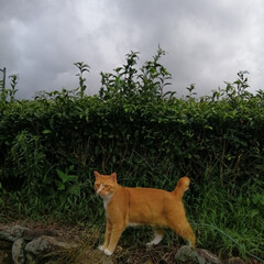 フォロー大歓迎/にゃんこ同好会/ねこのきもち/ねこ/雨/梅雨 雨が降ってくるニャー🙀☔ 早く草食べて帰…