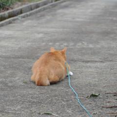 フォロー大歓迎/にゃんこ同好会/猫との暮らし/ねこのきもち/雪/散歩/... 雪が降ってきたニャー🙀 急いで帰るニャー…(3枚目)