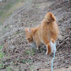にゃんこ同好会/ねこのきもち/散歩/おでかけ/フォロー大歓迎 散歩に行くまでここから動かないニャー😸🐈…(4枚目)