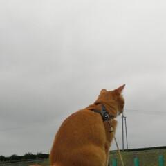 にゃんこ/ねこのきもち/散歩/フォロー大歓迎/LIMIAファンクラブ/LIMIAペット同好会/... 雨降りそうだニャー🙀 急いで➿😽😽😽(8枚目)