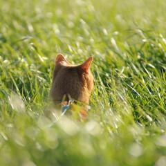 フォロー大歓迎/にゃんこ同好会/ねこのきもち/ねこにすと/春/散歩 今日は風も止んで春の陽気😸 暖かいニャー😻(8枚目)