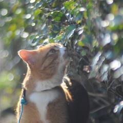 フォロー大歓迎/にゃんこ同好会/猫との暮らし/ねこのきもち/散歩 今日も爽やかな天気☀️😸 爽快だニャー😻…(7枚目)