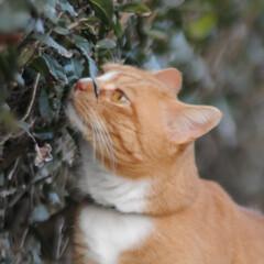 箱/にゃんこ同好会/猫との暮らし/ねこのきもち/散歩 落ち着く場所発見だニャー😻(8枚目)