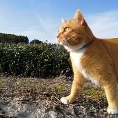 フォロー大歓迎/にゃんこ同好会/猫との暮らし/ねこのきもち/晴れ/散歩 良い天気😻☀️ 楽しい散歩😻🐾🐾🐾