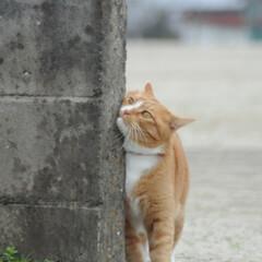 にゃんこ同好会/ねこのきもち/散歩/おでかけ/フォロー大歓迎 雨が降りだす前に散歩を満喫したニャー😻😻😻(6枚目)