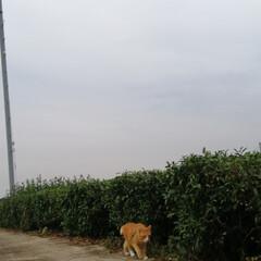 フォロー大歓迎/にゃんこ同好会/ねこのきもち/ねこ/散歩/雨 雨が降ってきたニャー😿☔(2枚目)