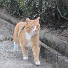 フォロー大歓迎/にゃんこ同好会/猫との暮らし/ねこのきもち/ねこにすと/風/... 今日は風が冷たかったニャー😽➿➿➿😱(6枚目)