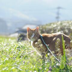 フォロー大歓迎/にゃんこ同好会/猫との暮らし/ねこのきもち/散歩 今日も爽やかな天気☀️😸 爽快だニャー😻…(5枚目)