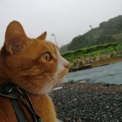 フォロー大歓迎/にゃんこ同好会/ねこのきもち/ねこ/雨/梅雨/... 雨が止まないニャー☔☔😿 降りすぎだニャ…