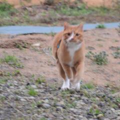 フォロー大歓迎/にゃんこ同好会/猫との暮らし/ねこのきもち/雪/散歩/... 雪が降ってきたニャー🙀 急いで帰るニャー…(7枚目)