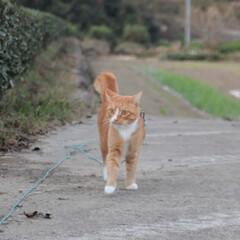 にゃんこ同好会/ねこのきもち/散歩/おでかけ/フォロー大歓迎 何かいないかニャー😽 ⁉️何か動いたかに…(6枚目)
