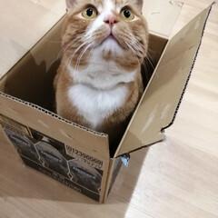 箱/にゃんこ同好会/猫との暮らし/ねこのきもち/散歩 落ち着く場所発見だニャー😻(4枚目)