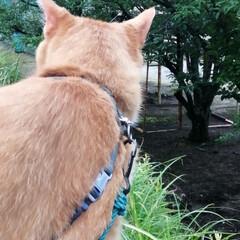 フォロー大歓迎/にゃんこ同好会/ねこのきもち/ねこ/梅雨/雨/... まだ雨が降るのかニャー😿☔(4枚目)