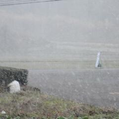 フォロー大歓迎/にゃんこ同好会/猫との暮らし/ねこのきもち/雪/散歩/... 雪が降ってきたニャー🙀 急いで帰るニャー…(9枚目)