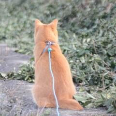 箱/にゃんこ同好会/猫との暮らし/ねこのきもち/散歩 落ち着く場所発見だニャー😻(7枚目)