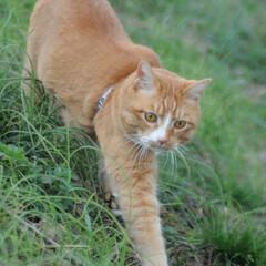 フォロー大歓迎/にゃんこ同好会/猫との暮らし/ねこのきもち/散歩 朝から雨降ってたけど止んでよかったニャー…(3枚目)