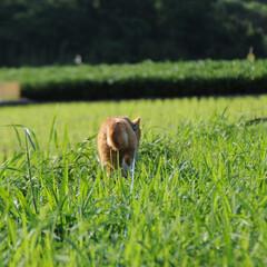 フォロー大歓迎/にゃんこ同好会/ねこのきもち/ねこ/晴れ/梅雨/... このところの雨で草が大分伸びてきたニャー…(5枚目)
