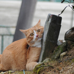 フォロー大歓迎/にゃんこ同好会/猫との暮らし/ねこのきもち/ねこにすと/散歩 気になる杭だニャー😻😻😻 いっぱいスリス…(3枚目)