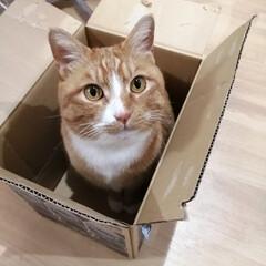 箱/にゃんこ同好会/猫との暮らし/ねこのきもち/散歩 落ち着く場所発見だニャー😻(2枚目)
