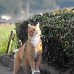 フォロー大歓迎/にゃんこ同好会/猫との暮らし/ねこのきもち/ねこにすと/風/... 今日は風が冷たかったニャー😽➿➿➿😱(7枚目)