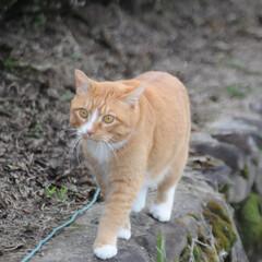 フォロー大歓迎/にゃんこ同好会/猫との暮らし/ねこのきもち/散歩 朝から雨降ってたけど止んでよかったニャー…(4枚目)