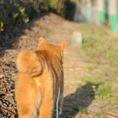 フォロー大歓迎/にゃんこ同好会/猫との暮らし/ねこのきもち/散歩/快晴 快晴☀️😻 少し寒いから走るニャー😸🐾🐾🐾(8枚目)