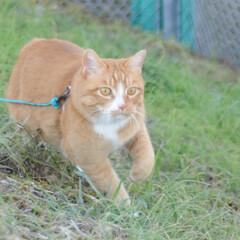 フォロー大歓迎/にゃんこ同好会/猫との暮らし/ねこのきもち/散歩/快晴 快晴☀️😻 少し寒いから走るニャー😸🐾🐾🐾(3枚目)