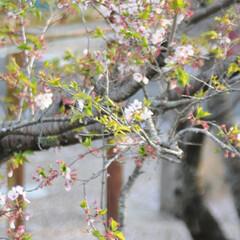 フォロー大歓迎/にゃんこ同好会/猫との暮らし/ねこにすと/ねこのきもち/春/... 🌻季節は進んでいるニャー😸(4枚目)