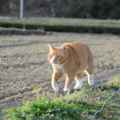 フォロー大歓迎/にゃんこ同好会/猫との暮らし/ねこのきもち/ねこにすと/風/... 今日は風が冷たかったニャー😽➿➿➿😱(3枚目)