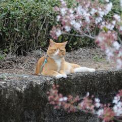 フォロー大歓迎/猫との暮らし/にゃんこ同好会/ねこにすと/ねこのきもち/花/... 桜が終わって草花が伸びてきたニャー😸🌱 …(5枚目)