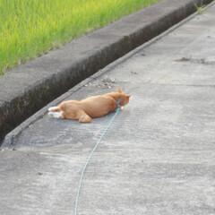 にゃんこ同好会/日暮れ/ねこのきもち/散歩/おでかけ/フォロー大歓迎 早く散歩に行かないと日がくれるニャー🙀(6枚目)