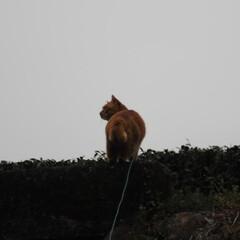 フォロー大歓迎/にゃんこ同好会/猫との暮らし/ねこのきもち/雨/散歩/... 雨が降ってきたニャー! 😿走って帰るニャ…(2枚目)