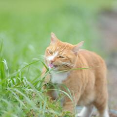 フォロー大歓迎/にゃんこ同好会/猫との暮らし/ねこにすと/ねこのきもち/散歩/... 桜が開花したニャー😻🌸🌸🌸 今日はポカポ…(5枚目)