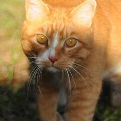 フォロー大歓迎/にゃんこ同好会/猫との暮らし/ねこのきもち/散歩/快晴 快晴☀️😻 少し寒いから走るニャー😸🐾🐾🐾(7枚目)