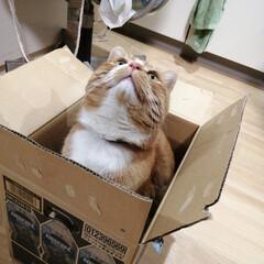箱/にゃんこ同好会/猫との暮らし/ねこのきもち/散歩 落ち着く場所発見だニャー😻(3枚目)