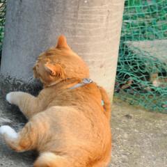 フォロー大歓迎/にゃんこ同好会/猫との暮らし/ねこにすと/ねこのきもち/春/... 🌻季節は進んでいるニャー😸(8枚目)
