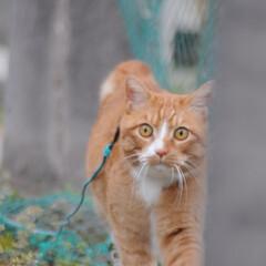 フォロー大歓迎/にゃんこ同好会/猫との暮らし/ねこのきもち/雨/散歩/... 雨が降ってきたニャー! 😿走って帰るニャ…(3枚目)