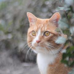 フォロー大歓迎/にゃんこ同好会/猫との暮らし/ねこのきもち/ねこにすと/散歩 気になる杭だニャー😻😻😻 いっぱいスリス…(4枚目)